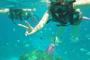 コバルトブルーの海は「リアル水族館」